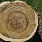 wood_cross_section_07