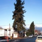 1990_Jeff Wall_The_Pine_on_the_Corner_1990